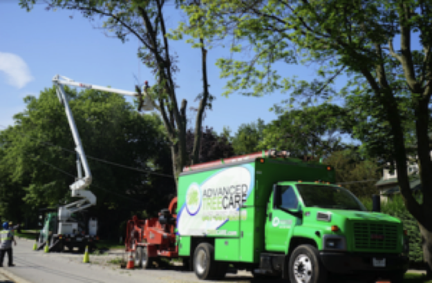It takes extensive training to become a Certified Arborist